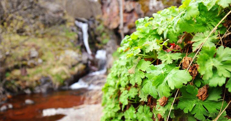 Stara planina – Toplodolski vodopadi