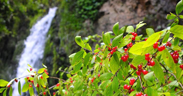Vrapčanski vodopad